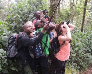 Looking at the Rwenzori Turaco